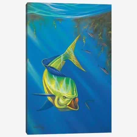 Mahi Mahi Canvas Print #GEP100} by Geno Peoples Canvas Print