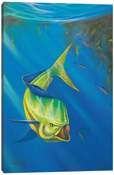 Mahi Mahi Canvas Art Print