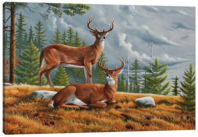Buck Country 1 Canvas Art Print