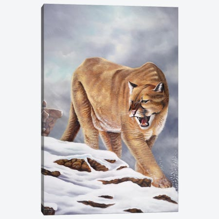 Cougar Canvas Print #GEP44} by Geno Peoples Canvas Wall Art