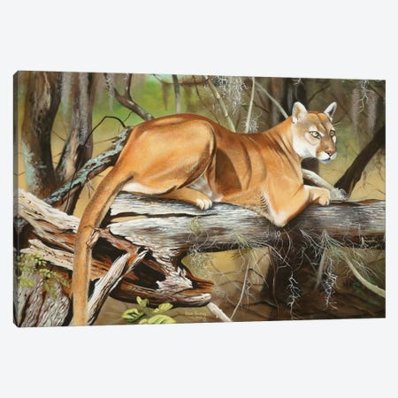 Florida Panther Canvas Print #GEP67} by Geno Peoples Canvas Art