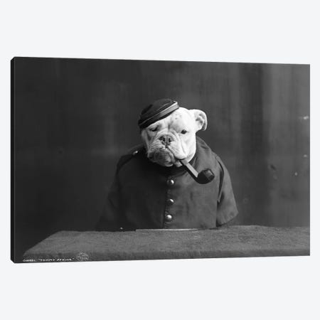 Bulldog, C1905 Canvas Print #GER204} by Unknown Canvas Artwork