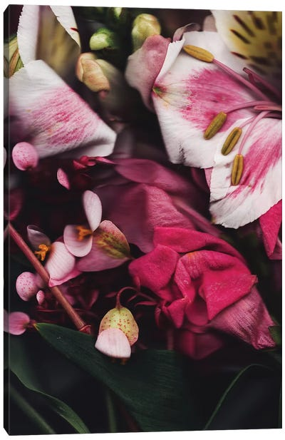 Seja II Canvas Art Print