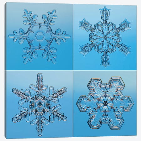 Snowflakes Seen Through Microscope Canvas Print #GET26} by Steve Gettle Canvas Art