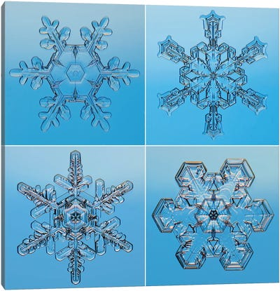 Snowflakes Seen Through Microscope Canvas Art Print