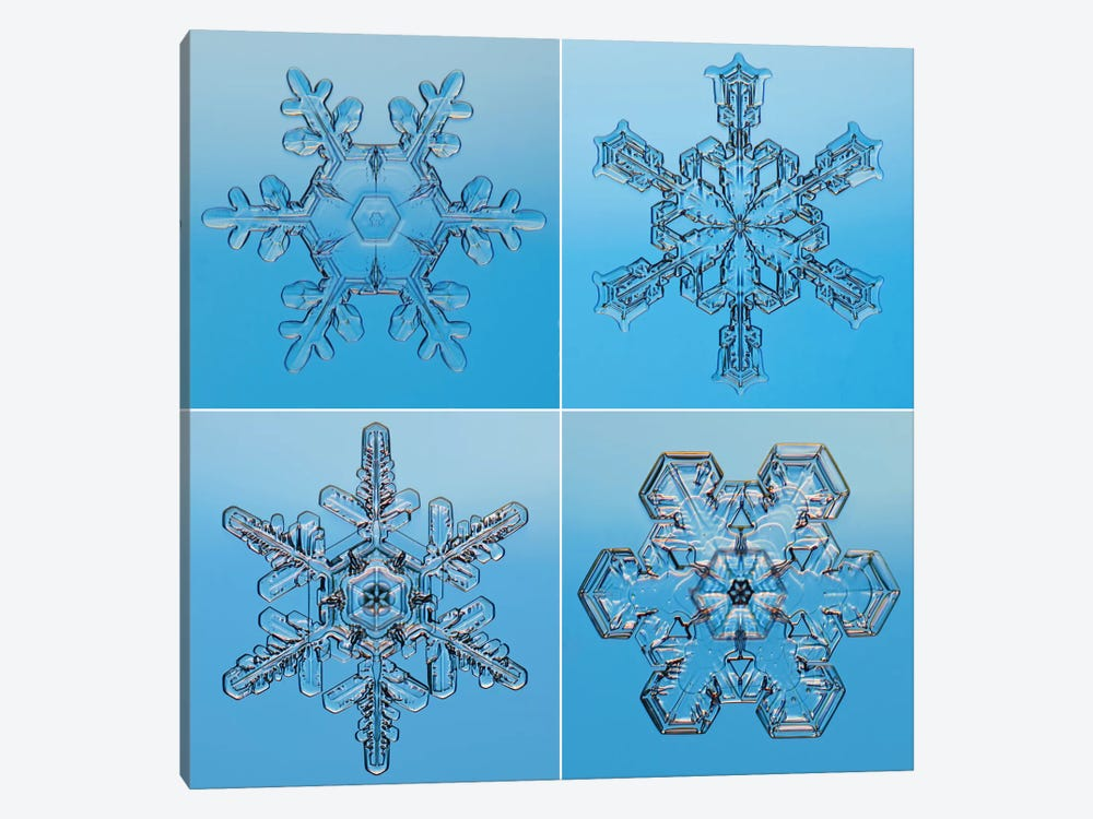 Snowflakes Seen Through Microscope by Steve Gettle 1-piece Canvas Print