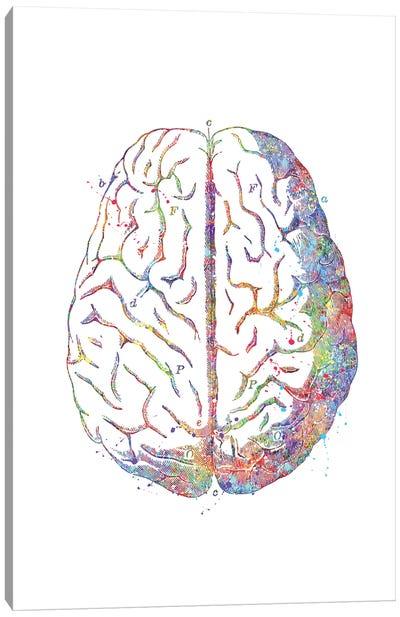 Brain Anatomy Canvas Art Print