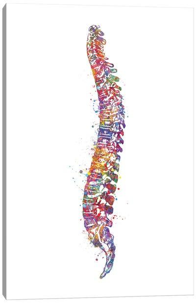 Spinal Cord I Canvas Art Print