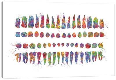 Teeth Diagram Canvas Art Print