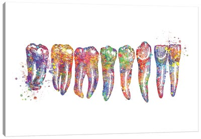 Tooth Row Anatomy Canvas Art Print
