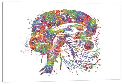 Brain Cranial Canvas Art Print