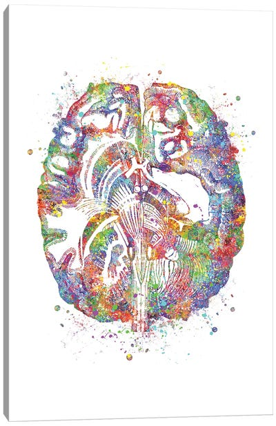 Brain Cross Section Canvas Art Print