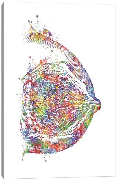 Breast Canvas Art Print