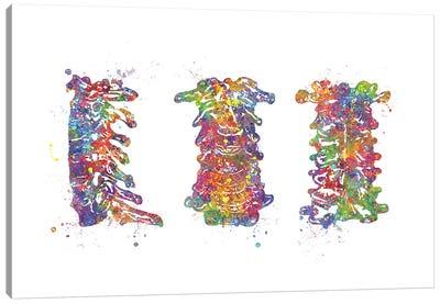 Cervical Spine Canvas Art Print