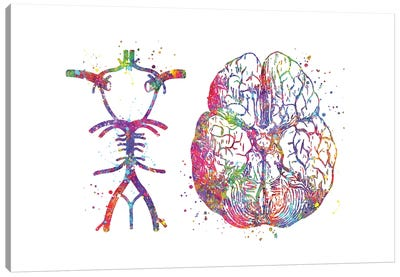 Circle Of Willis Canvas Art Print