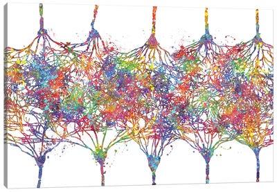 Cortical Neurons Canvas Art Print