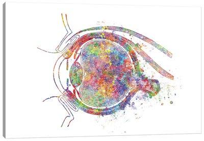 Eye Socket Canvas Art Print