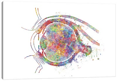 Eye Socket Canvas Art Print