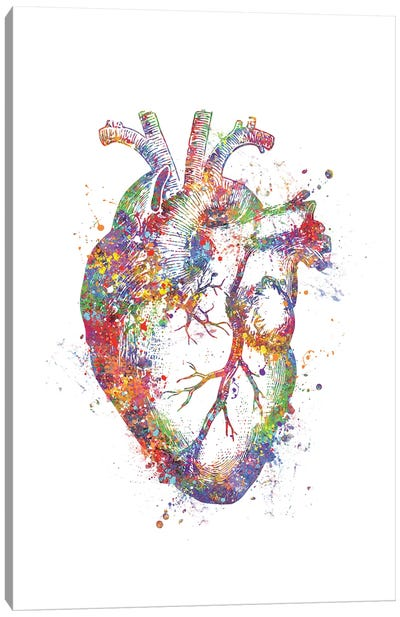 Heart Anatomy Fig Canvas Art Print