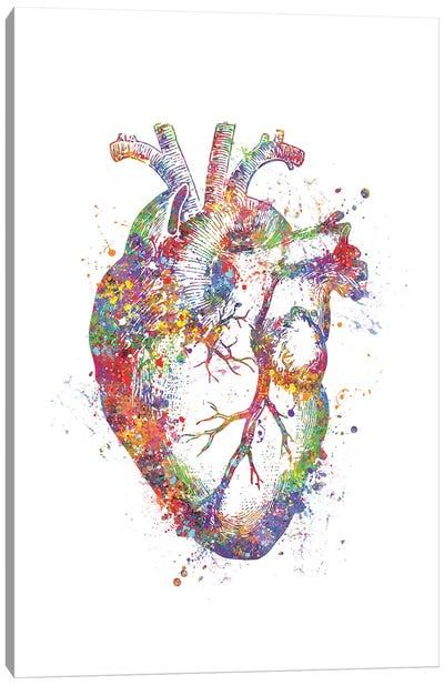 Heart Anatomy Fig Canvas Art Print