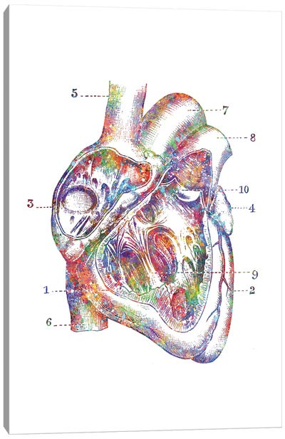 Heart Cross Section Canvas Art Print