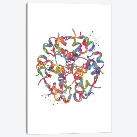Insulin Structure Canvas Print #GFA68} by Genefy Art Canvas Artwork