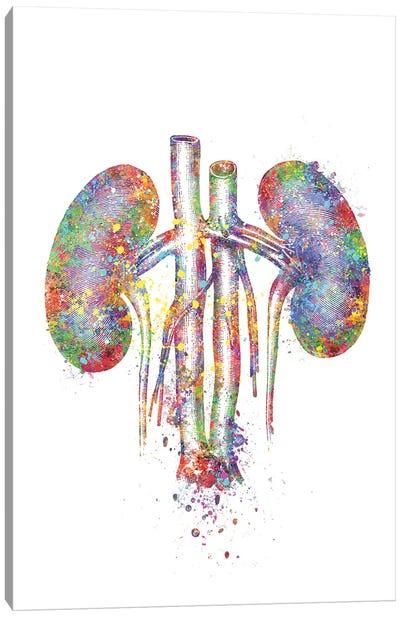 Kidneys II Canvas Art Print