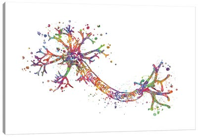 Nerve Cell Canvas Art Print