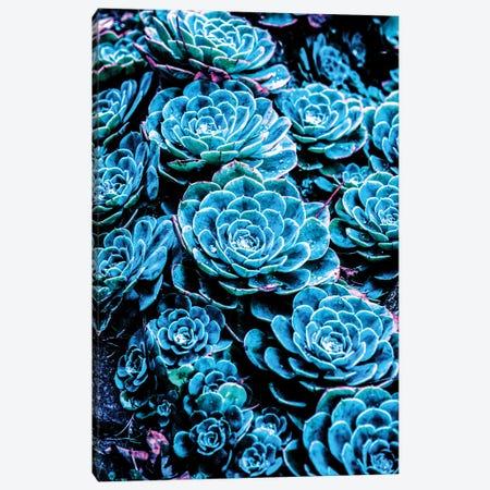 Cactus Canvas Print #GFN23} by Gab Fernando Canvas Art Print