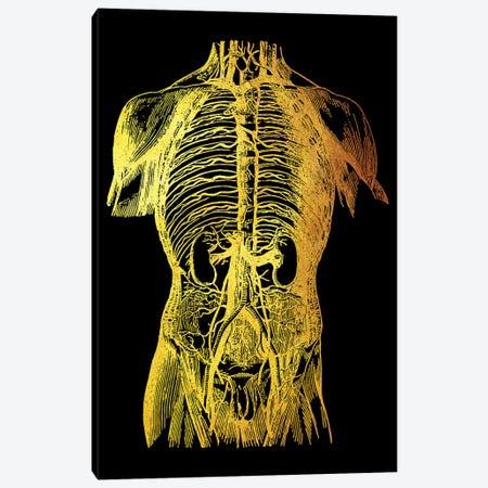 Back Nerves II Canvas Print #GFN91} by Gab Fernando Canvas Art