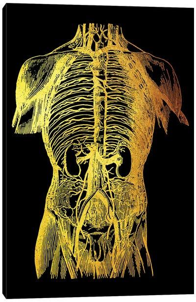 Back Nerves II Canvas Art Print