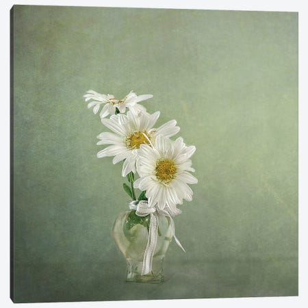 3 White Daisies Canvas Print #GGR1} by Gaille Gray Canvas Wall Art