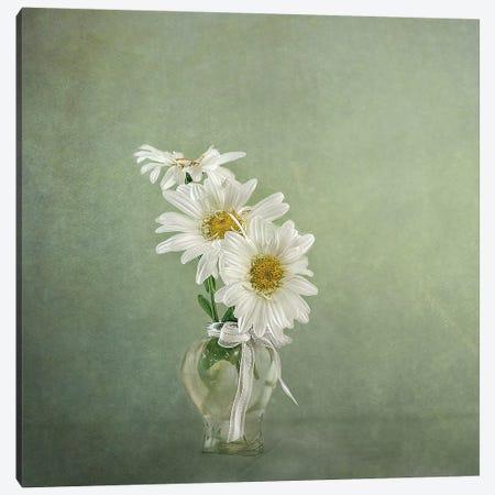 3 White Daisies Canvas Print #GGR1} by Gaille Gray Canvas Wall Art