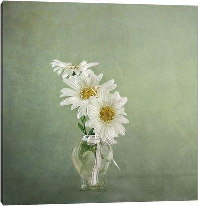 3 White Daisies Canvas Art Print
