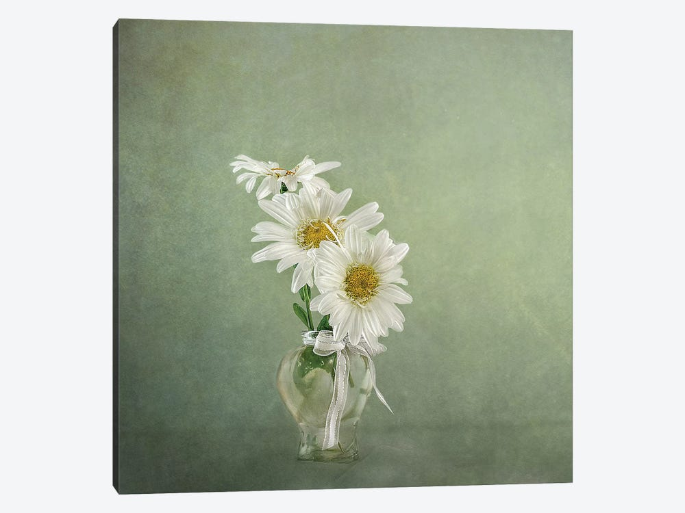 3 White Daisies by Gaille Gray 1-piece Canvas Print