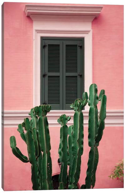 Cactus In Pink Canvas Art Print