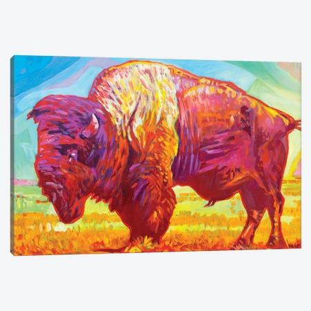 Red Buffalo Canvas Print #GHE31} by Greg Heil Canvas Art
