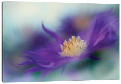 Gold & Purple in the Mist I Canvas Art Print