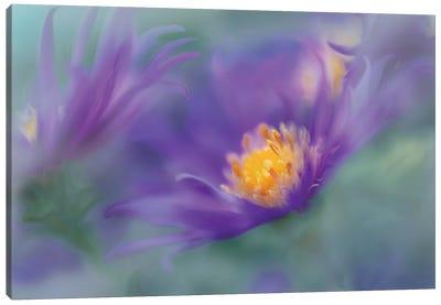 Gold & Purple in the Mist II Canvas Art Print