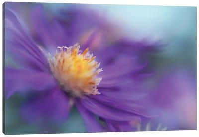 Gold & Purple in the Mist III Canvas Art Print