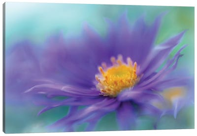 Gold & Purple in the Mist V Canvas Art Print
