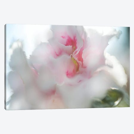 Hope in Pink II Canvas Print #GIH15} by Gillian Hunt Canvas Art Print