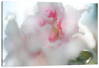 Hope in Pink II Canvas Art Print