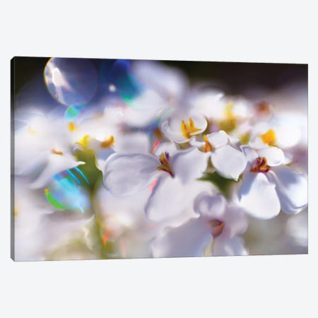 Jewels of the Enchanted Forest I Canvas Print #GIH1} by Gillian Hunt Art Print