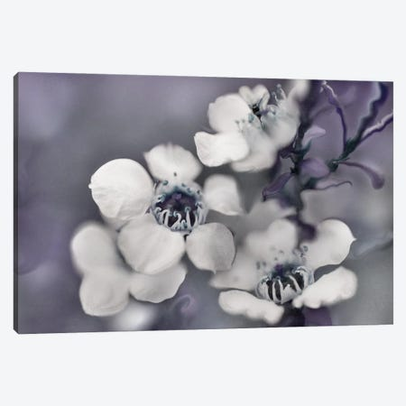 Tales from an Enchanted Glen II Canvas Print #GIH24} by Gillian Hunt Canvas Art