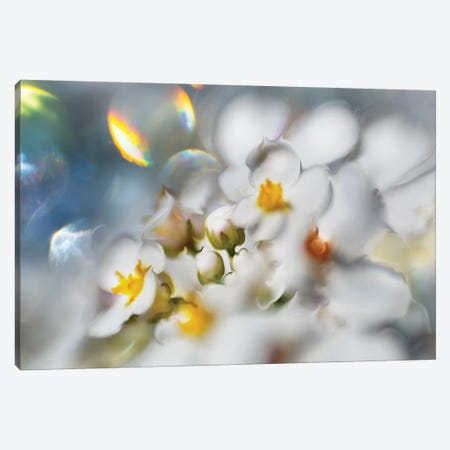 Jewels of the Enchanted Forest III Canvas Print #GIH3} by Gillian Hunt Canvas Art Print