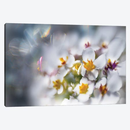 Jewels of the Enchanted Forest IV Canvas Print #GIH4} by Gillian Hunt Canvas Artwork