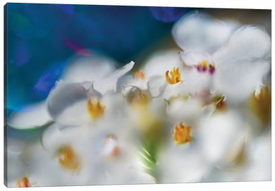 Jewels of the Enchanted Forest V Canvas Art Print