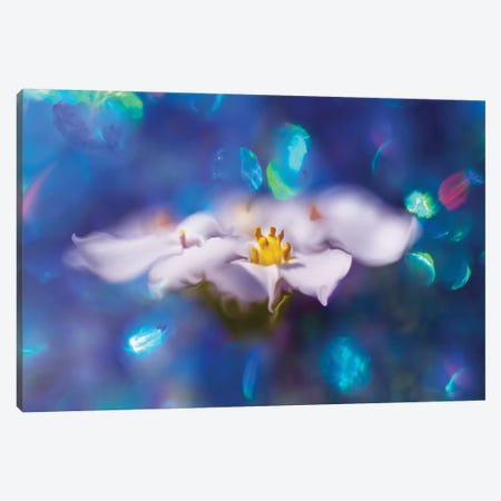 Jewels of the Enchanted Forest VI Canvas Print #GIH6} by Gillian Hunt Canvas Art