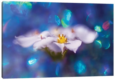 Jewels of the Enchanted Forest VI Canvas Art Print